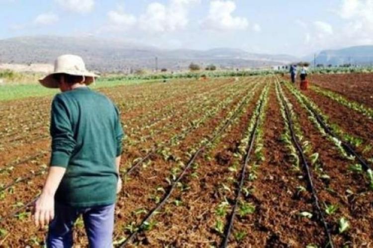 Αποτέλεσμα εικόνας για Η Ελληνίδα Αγρότισσα και οι πολιτικές για την ενίσχυση της θέσης της στην ύπαιθρο.
