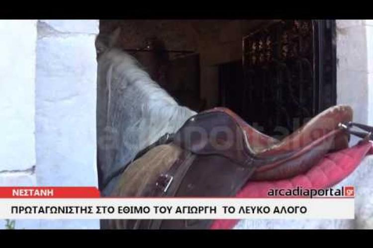 ArcadiaPortal.gr Την εικόνα του Αϊ-Γιώργη «προσκύνησε» λευκό άλογο στη Νεστάνη