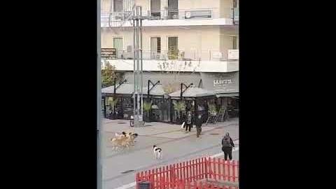 ArcadiaPortal.gr Επίθεση αδεσποτων σε ηλικιωμένο στην πλατεία Πετρινού