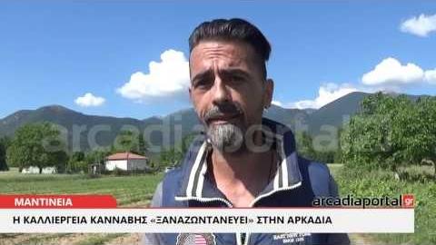 ΑrcadiaPortal.gr  Η νόμιμη καλλιέργεια κάνναβης «ξαναζωντανεύει» στην Αρκαδία