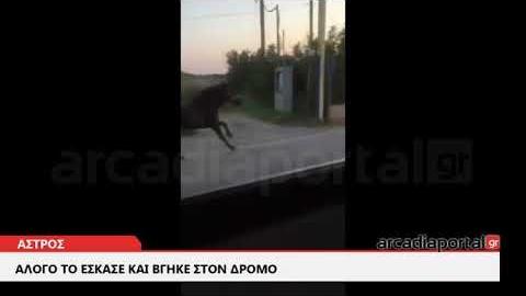 ArcadiaPortal.gr Άλογο έτρεχε στο δρόμο Άστρους-Παραλίου Άστρους