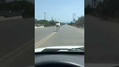Astrosnews.gr - Άλογο στο στο δρόμο για Παράλιο Άστρος!!!